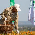 Natura Siberica: Wild Harvesting